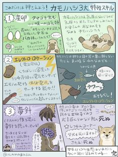 カモノハシ Animal Facts, Pretty Birds, Mammals, Animals And Pets, Habitats, Animal Pictures, Beast, Dog Cat, Knowledge