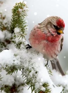 Aww so cute save this if you love/like birds or just this kind
