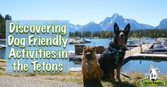 Our last visit to the Grand Tetons revealed that dog friendly options in the national park were slim. This time, we found lots of ways to keep Ty & Buster busy!