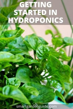 Hydroponic gardening 503981014550541925 - Getting Started In Hydroponics – A Beginner's Guide – Smart Garden Guide Source by pamelawyckoffsc Home Hydroponics, Hydroponic Farming, Hydroponic Growing, Aquaponics Fish, Aquaponics System, Hydroponic Gardening, Indoor Gardening, Hydroponic Vegetables, Hydroponic Systems