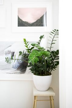 View entire slideshow: Find Your Plant Soulmate on http://www.stylemepretty.com/collection/4450/