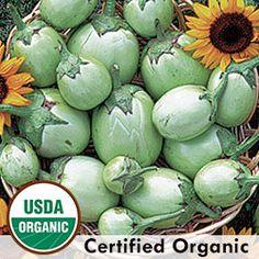 Eggplant, Applegreen Organic | Seed Savers Exchange