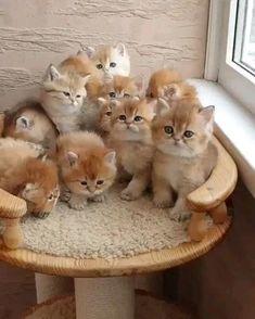 Cute kittens  #cat #cutecat #kittens #kitty #adorablekittens Cute Baby Cats, Funny Cute Cats, Baby Animals Super Cute, Cute Little Kittens, Cute Cat Gif, Cute Little Animals, Cute Kittens, Cute Cats And Kittens, Cute Funny Animals