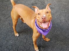KARO-A1045811 2 BE DESTROYED TONIGHT 8/6/15 OR TOMORROW!!! SHE ONLY HAS HOURS TO LIVE!!! HOW TERRIFIED, SCARED, HEARTBROKEN N FRIGHTENED THESE POOR ANIMALS MUST BE!!! WE HAVE A CHOICE, WE CAN BE THEIR VOICE, WE CAN CHOOSE LIFE, NOT DEATH!!! WE R HER ONLY HOPE IN SURVIVING!! SAY YES TO COMPASSION FOR KARO'S LIFE!!