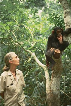 jane goodall- amazing conservationist that defined the way some people think about the chimpanzee species and the theory of evolution