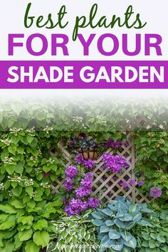 This list of the best shade loving shrubs and perennials is awesome! There are lots of plant options for containers, to grow under trees and that are low maintenance to cover any shade garden landscaping possibilities. #fromhousetohome #gardening #gardenideas #shade #plants #shadeplants Partial Shade Perennials, Shade Flowers Perennial, Shade Loving Shrubs, Shade Shrubs, Flowers Perennials, Plants Under Trees, Sun Plants, Cool Plants, Shade Plants Container