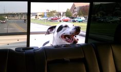 This is the greatest picture of Houston riding in the back of the truck -- even though he IS a mamma's boy haha