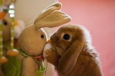 Animals with stuffed animals of themselves. Total cute overdose.