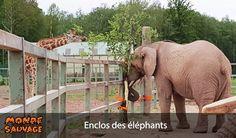 Enclos des éléphants.