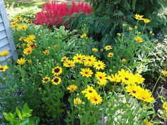 perennial garden ideas | nh perennial garden designs
