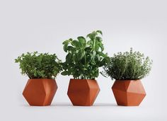 Herb Planter by Nick Fraser