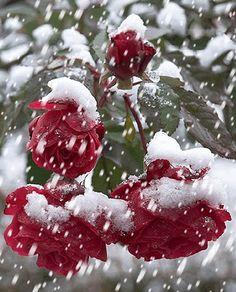 """mertce34: """"Karlar yağıyor sevdiklerimin üzerine Dün yarına gelmeyecek gibi sanki Bu günmü ? o zaten yaşanmadıki .. """""""
