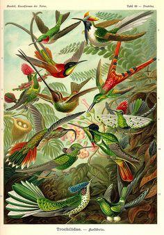 Ernst Haeckel ~ Art Forms in Nature #topshoppromqueen …