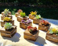50 Succulent WEDDING Favors Succulent Bridal by 5starsucculents