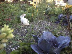 Little bunny in our garden