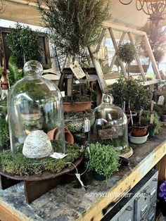 I have cloches that I need to use instead of store away! I have cloches that I need to use instead of store away! Container Plants, Container Gardening, Deco Boheme Chic, Vibeke Design, Greenhouse Plans, Miniature Greenhouse, Greenhouse Wedding, Deco Floral, Garden Shop