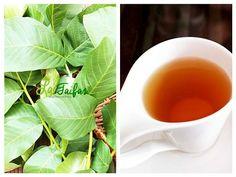 Nucul este unul din cele mai mari daruri ale naturii pentru sănătatea noastră. Atât fructele, cât și frunzele sale Tea Cafe, Cold Drinks, Salvia, Herbalism, Healthy Lifestyle, Flora, Remedies, Health Fitness, Herbs