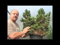Bonsai for Less than the Price of a Shirt - YouTube