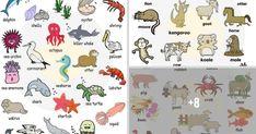 Learn Animal Names in English 13