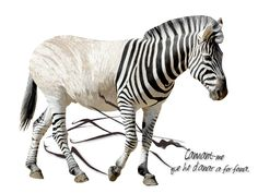 https://flic.kr/p/RHFD25 | Zebra? | Poesia & visual