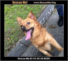 ― Massachusetts Pomeranian Rescue ― ADOPTIONS ―RescueMe.Org