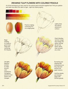 How to draw plants, by Wendy Hollender | ArtistsNetwork.com