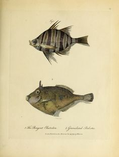 1790 - Journal of a voyage to New South Wales : - Biodiversity Heritage Library