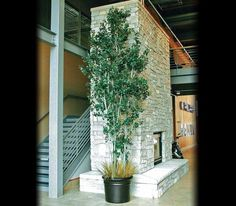 Artificial aspen trees by Commercial Silk Int'l can be manufactured with either our green aspen leaves or with our artificial yellow aspen leaves. An artificial aspen can be used to theme indoor commercial projects around the globe.
