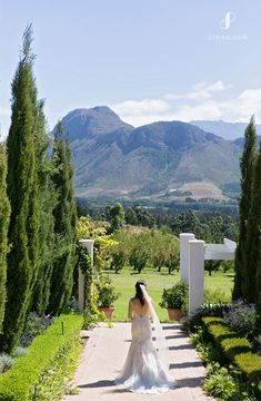 How Much Does a Wedding Cost in South Africa? | Pink Book Weddings Wedding Costs, Budget Wedding, Plan Your Wedding, Wedding Tips, Wedding Vendors, Wedding Planner, Destination Wedding, Wedding Book, Dream Wedding