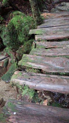 木の橋[yakushima]