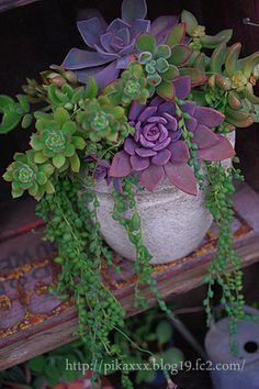 love the purple and green together in this Succulent garden container