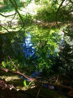 Trees + river- by Tamara Slager