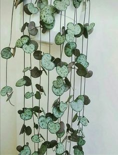 10 Stylish Indoor Plants For Obsessed Plant Moms - - - Looking to expand your indoor plant collection? Check out these ten favorites to add some variety and flare to your green space (and further crowd your counter tops)! Hanging Baskets, Hanging Plants, Potted Plants, Garden Plants, Foliage Plants, Vegetable Garden, Silk Plants, Garden Shrubs, Patio Plants