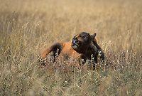 Mamíferos: los mamíferos con pezuñas