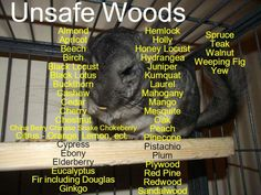 Unsafe Woods for Chinchillas