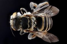 The USGS Great Lakes Science Center is a buzz over National #PollinatorWeek2014: http://on.doi.gov/1qsIm6P pic.twitter.com/c85fPQiFYP
