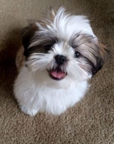 #cute#animals