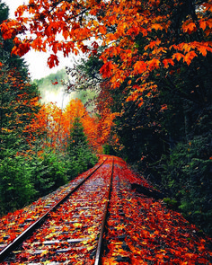 Draw In Buyers With Colorful Fall Landscaping Ideas - NY Homes Inc Autumn Scenes, Autumn Cozy, Autumn Aesthetic, Autumn Photography, Photography Tips, Happy Photography, Digital Photography, Fall Wallpaper, Fall Pictures