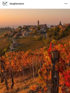 Autumn in Piedmont. Vineyard, Shots, The Unit, Wine, Sunset, Gallery, Amazing, Instagram Posts, Piedmont Italy