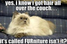 """Details about Funny Cats Cute Kittens Animal Photo Fridge Magnet 2 """"x Collectibles - Funny Animals Animal Captions, Animal Jokes, Funny Animal Memes, Cute Funny Animals, Funny Cute, Funny Pics, Videos Funny, Funniest Animals, Funny Animals With Captions"""