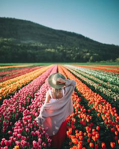 spring time tulips in british columbia.
