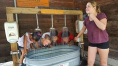 The heat kept the crowd away but we stayed cool under the hand washing units at the Maryland Zoo in Baltimore. Not sure if the kids had more fun in the water or looking at the animals.  8-19-16