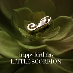 Happy Birthday Little Scorpion! Scorpios are a passionate personality, and will be loyal to you until the end, much like our little scorpion!  ‪#‎alexwoo‬ ‪#‎madeinny‬ ‪#‎lovegold‬ ‪#‎littleicons‬ ‪#‎scorpio‬ ‪#‎starsign‬ ‪#‎zodiac‬  http://www.alexwoo.com/little-signs-scorpion-scorpio-in-14-kt-yellow-gold.html