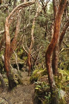 Forêt du parc national El Cajas en Equateur
