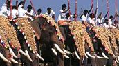 The great elephant march, Kerala