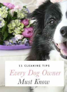 11 Cleaning Tips Every Dog Owner Must Know Seeing as I resorted to several already, this list is pretty handy