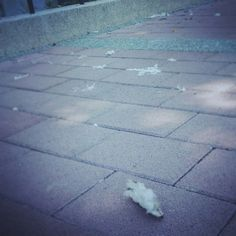 生活照:散落的日常練習  #已凋零 #沉默的棉絮