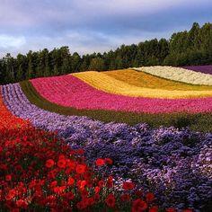 Furano, Hokkaido, Japan, photo by @0zj0