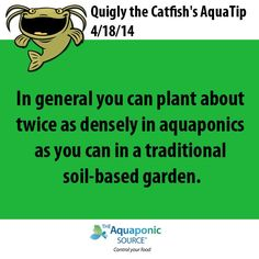 in general you can plant about twice as densely in aquaponics as you can in a traditional soil-based garden.