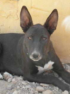 ACE Animal Care España - Yuma
